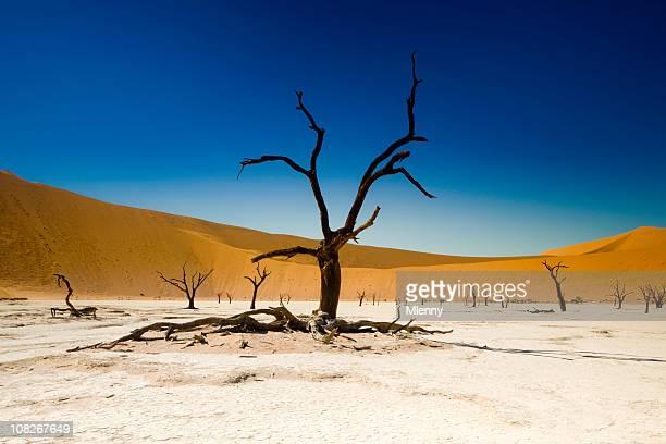 Dead Tree in Desert and Salt Flat