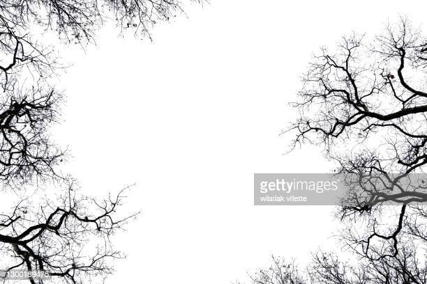 dead tree isolated with white background. - branch stock pictures, royalty-free photos & images