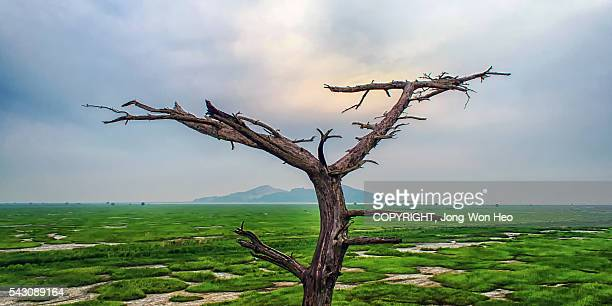 A dead tree looking at the green field filled with the living lifes