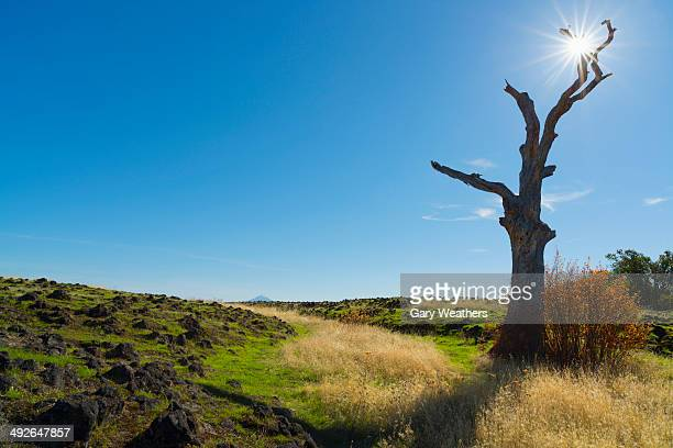 dead tree next to field on sunny day, medford, oregon, usa - medford oregon stock photos and pictures