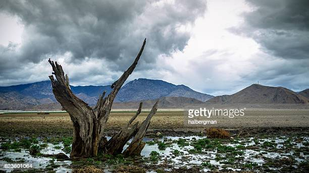 Dead Tree on Dry Lake Bed