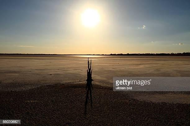 Dead Tree on Lake Ninan Salt Lake Victoria Plains Western Australia