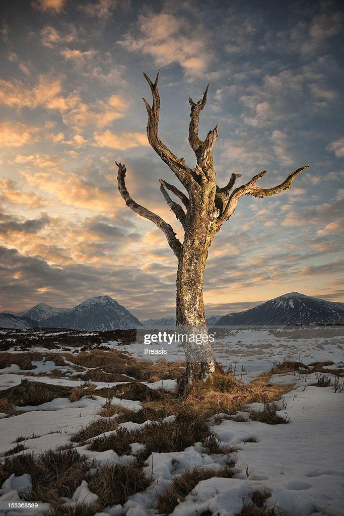 Dead Tree On Rannoch Moor : Stock Photo
