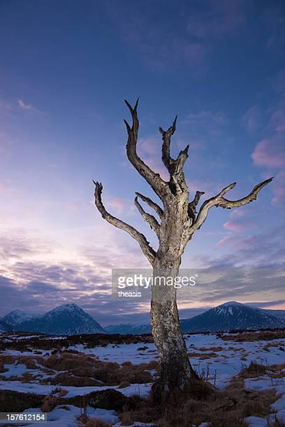 Toter Baum auf Rannoch-Moor