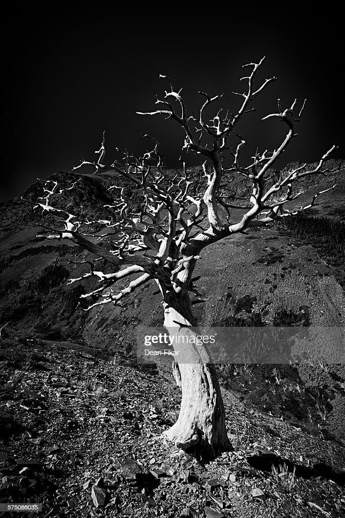Dead Tree on the Scenic Point Trail : Foto de stock