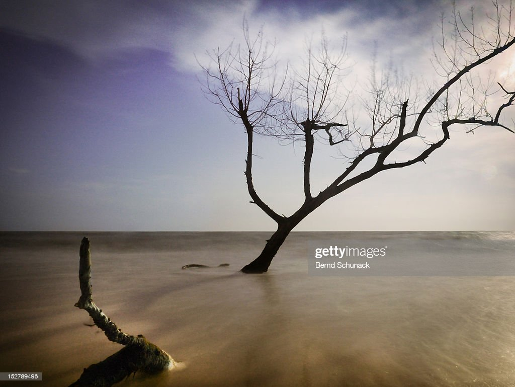 Dead tree : Stock Photo