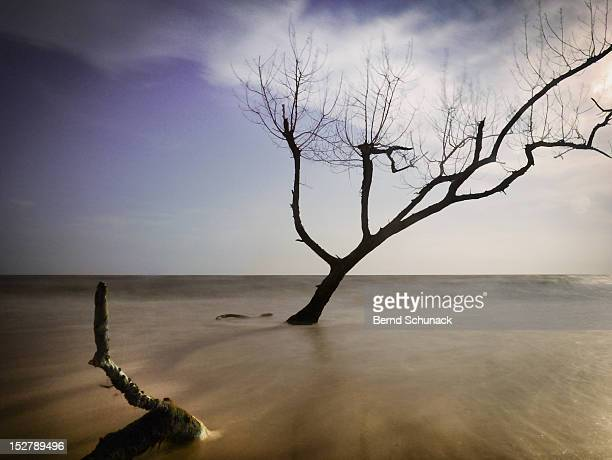 dead tree - bernd schunack stock pictures, royalty-free photos & images