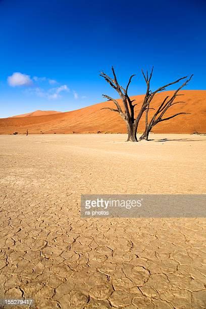 古い木 - ナミブ砂漠 ストックフォトと画像