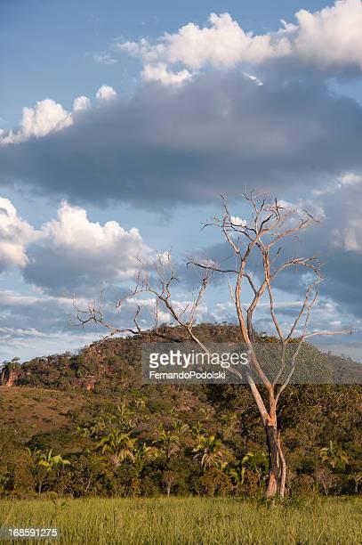 dead árvore - terreno coberto de grama - fotografias e filmes do acervo