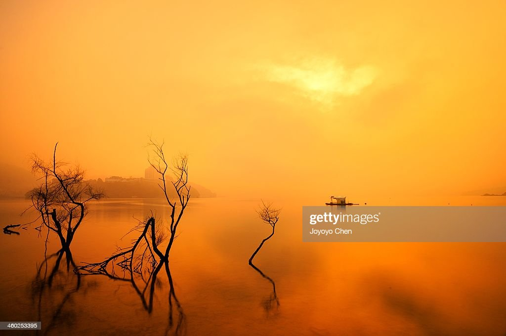 Dead tree reflection on lake at dawn : Stock Photo
