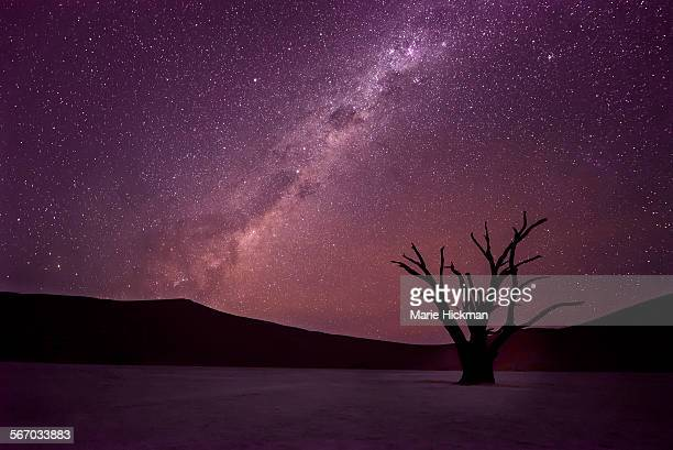 Dead tree silhouette with Milkyway at night
