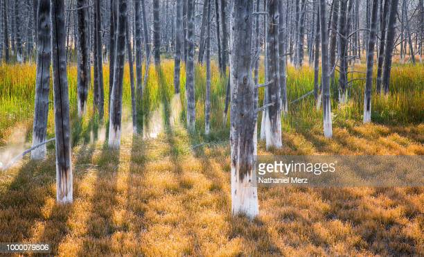 dead tree society #2 - nathaniel woods stock pictures, royalty-free photos & images
