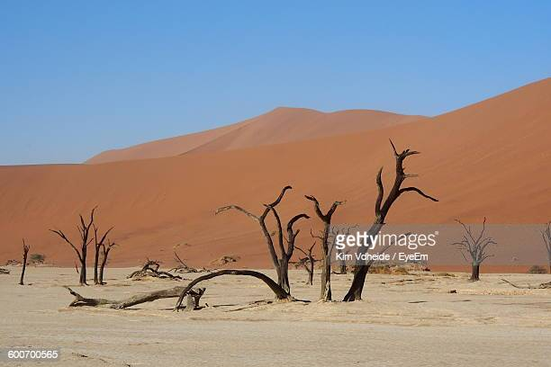 dead trees against sand dunes in dead vlei - arid stock pictures, royalty-free photos & images