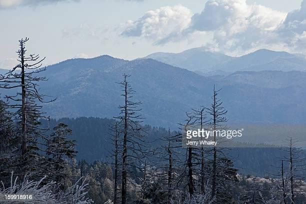 dead trees and  frost, clingmans dome - clingman's dome fotografías e imágenes de stock