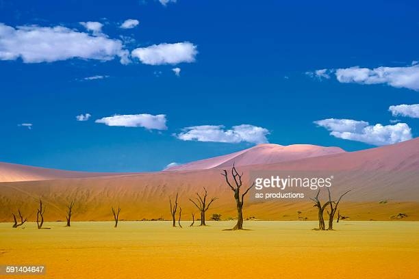 Dead trees and sand dunes in remote desert landscape