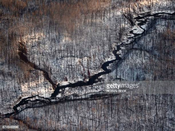 Dead trees are seen in this aerial view on April 17 2017 near Fort McMurray Canada one year after the Fort McMurray fire A few lateseason snowflakes...