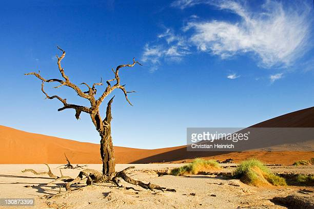 Dead trees between high red dunes on a dry loam vlei. Deadvlei (by Sossusvlei), Namib Desert, Namibia