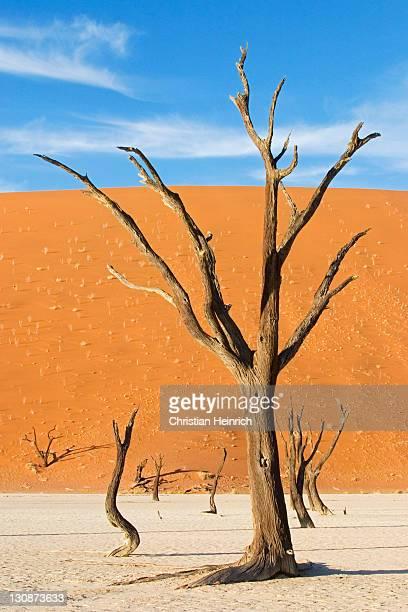 Dead trees between high red dunes on a dry loam vlei. Deadvlei (by Sossusvlei), Namib Desert, Namibia