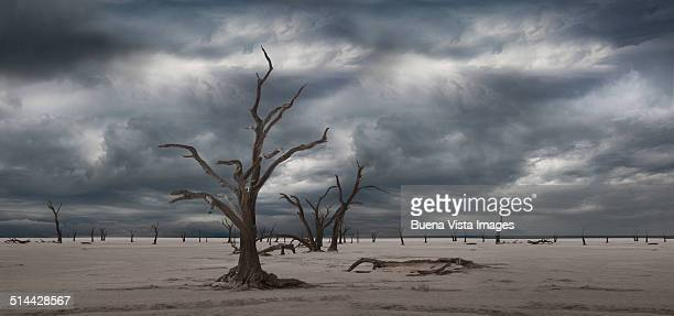 dead trees in desert under cloudy sky - apocalypse stock pictures, royalty-free photos & images