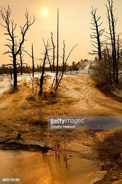 dead trees in golden mineral deposits/smoky sky - timothy hearsum stock pictures, royalty-free photos & images