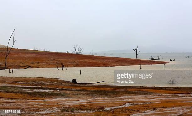 Dead trees in Lake Hume Victoria Australia
