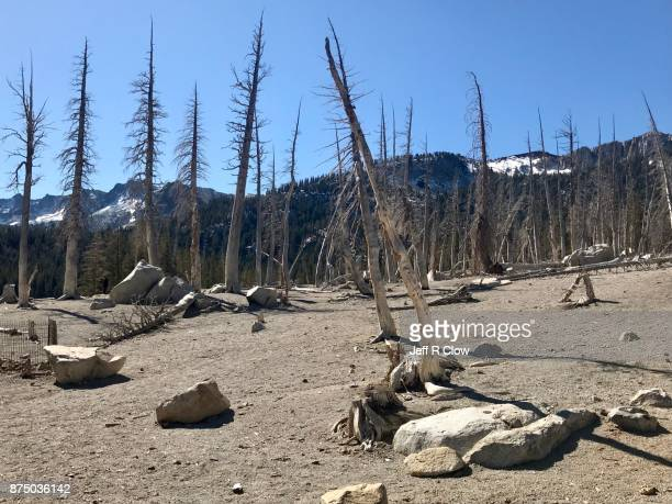 Dead trees in the mountains 3