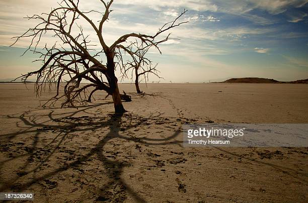 dead trees making shadows on the sand - timothy hearsum stock pictures, royalty-free photos & images