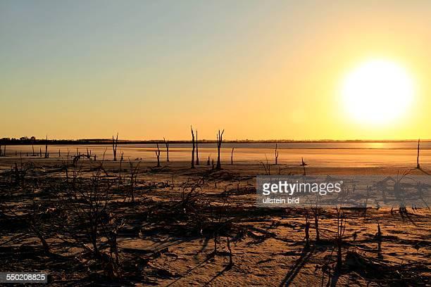 Dead Trees on Lake Ninan Salt Lake Victoria Plains Western Australia