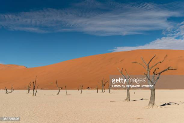 dead trees on salt clay pan at deadvlei, sossusvlei in namib-naukluft park, namibia, africa - ナミブ砂漠 ストックフォトと画像