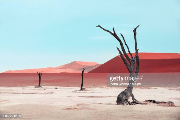 dead trees - namibia stock pictures, royalty-free photos & images
