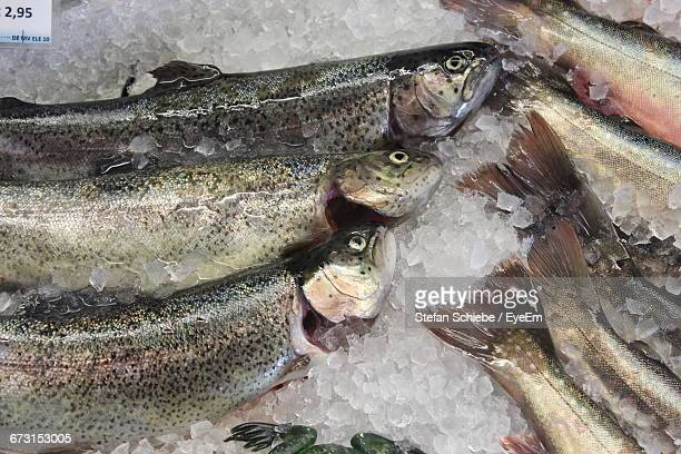 Dead Trouts On Ice For Sale At Market Stall