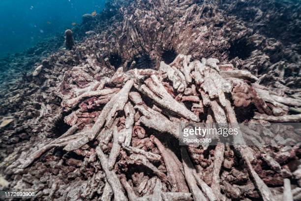 dead underwater coral reef with coral bleaching due to climate change - el nino stock pictures, royalty-free photos & images