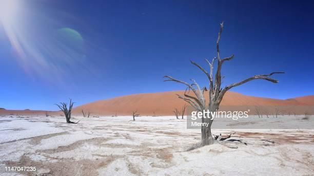 dead vlei namib desert trees namibia panorama taken february 2019 - dead vlei namibia stock pictures, royalty-free photos & images