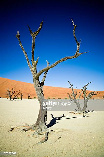 dead vlei sossusvlei namibia - mlenny stock-fotos und bilder