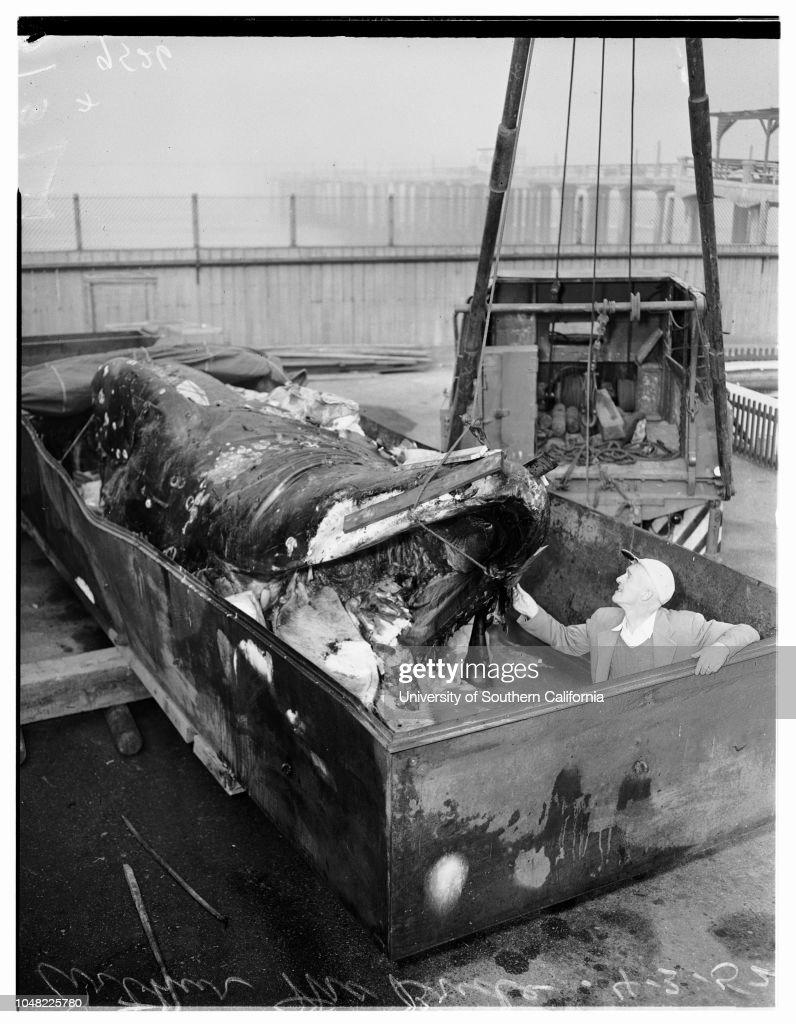 Dead Whale At Hermosa Beach Aquarium 1952 News Photo
