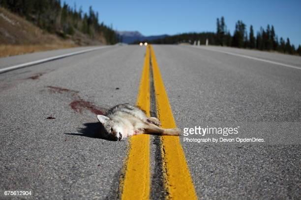 Dead Wildlife on Highway