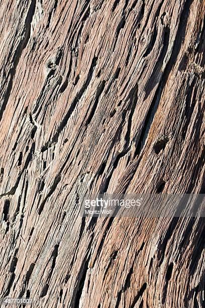Dead wood, detail, Dead Pan, Sossusvlei, Namib Desert, Namibia