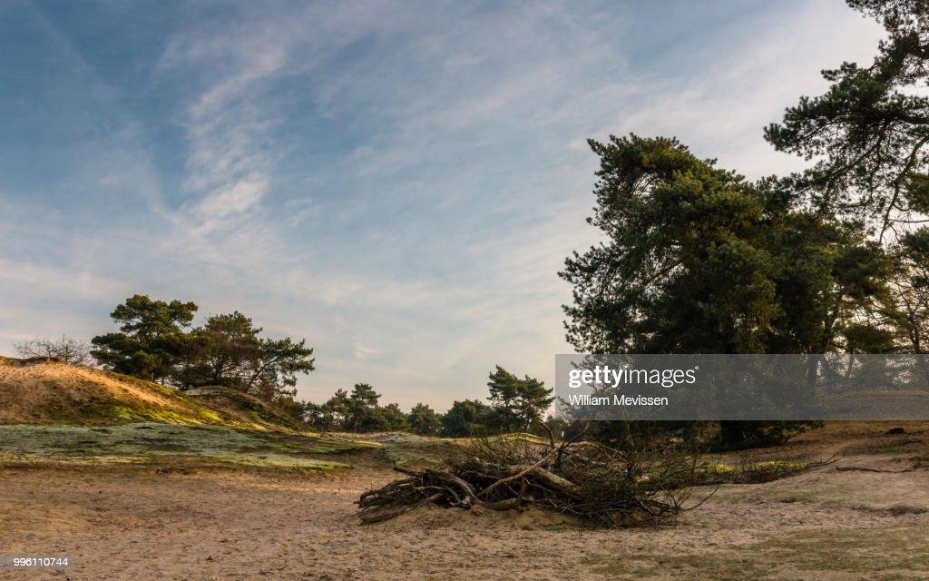 Dead Wood : Stockfoto