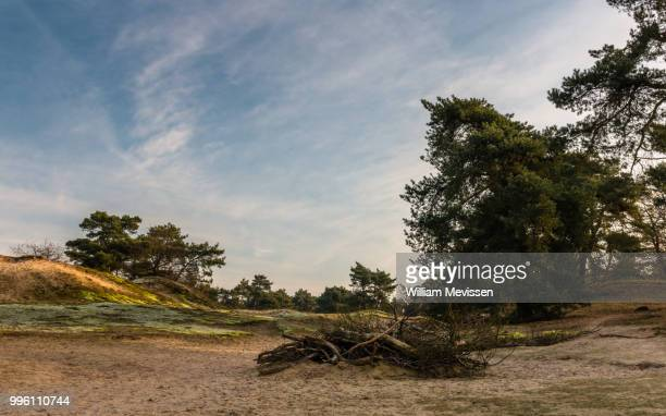 dead wood - william mevissen stockfoto's en -beelden