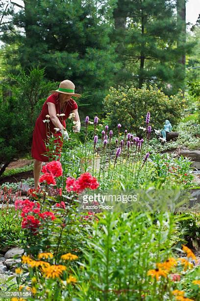 Deadheading in garden