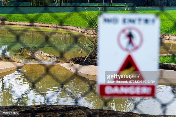 A deadly Saltwater Crocodile behind a safety fence in a zoo Australia Zoo Beerwah Sunshine Coast Queensland Australia