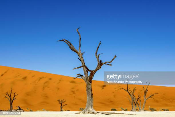 deadvlei, namibia, africa - namib naukluft national park stock pictures, royalty-free photos & images