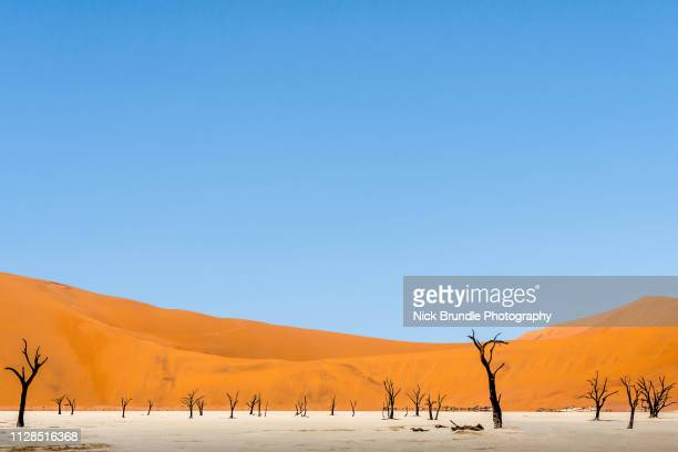 deadvlei, namibia, afrika. - namib naukluft national park stock pictures, royalty-free photos & images