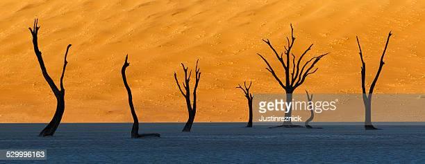 deadvlei 、ナンビア - ナミブ砂漠 ストックフォトと画像
