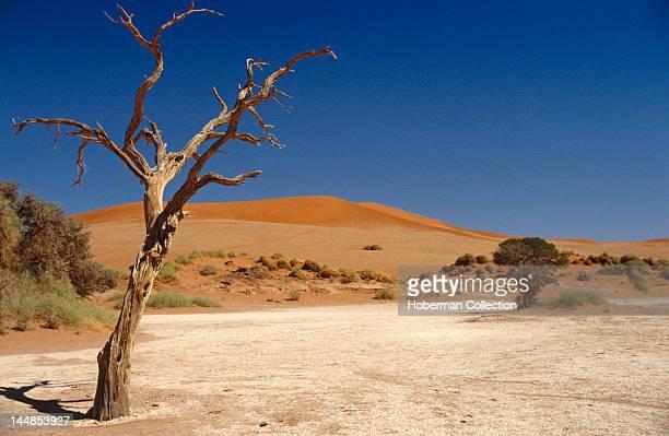 Deadvlei NamibNaukluft Park Namibia