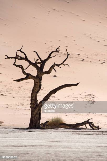 deadvlei, sossusvlei. namibia - loam stock photos and pictures