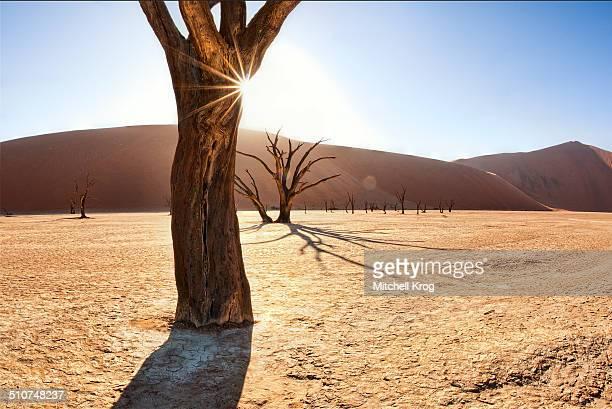 Deadvlei sunrise - Namibia