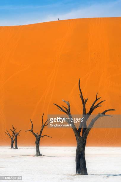deadvlei trees with the colorful background in namib-naukluft park, namibia - namibia fotografías e imágenes de stock