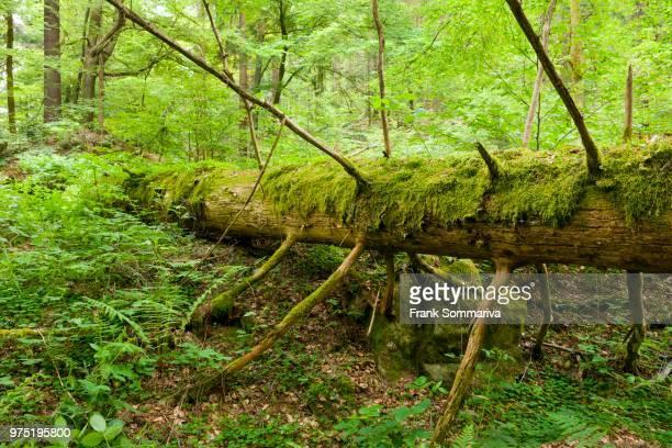 Bosque De Turingia Fotografias E Imagenes De Stock Getty Images