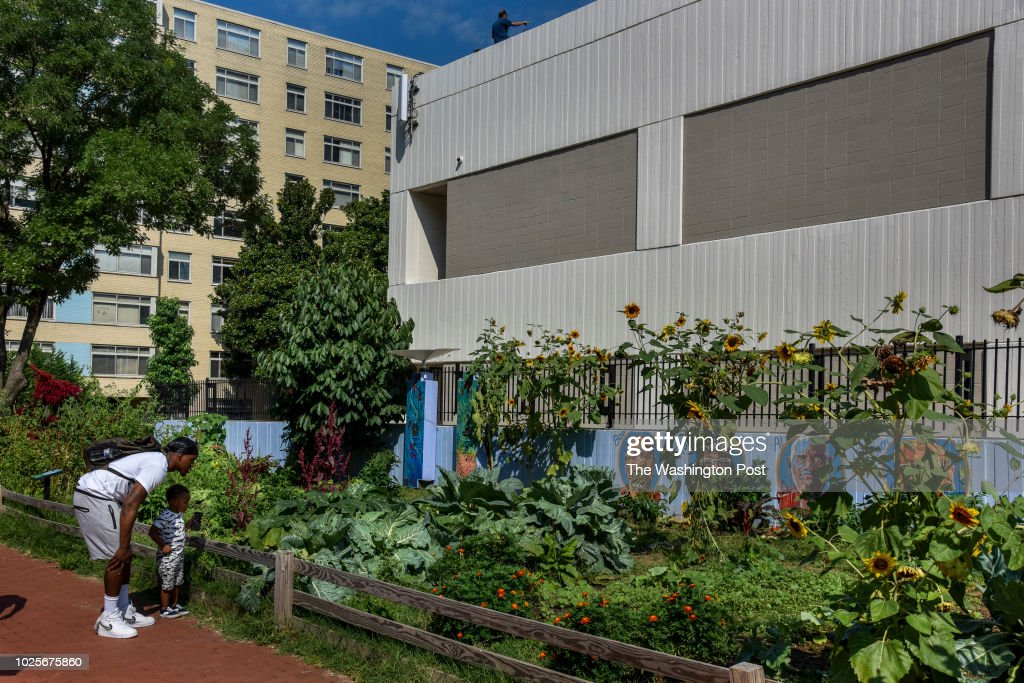 Dean Wakefield, 22, of DC, guides his son, D.J., in an exploration of the student-managed urban garden at the George Washington University on Wednesday, August 29, 2018, in Washington, DC. Students grow food in the garden that is donated to Miriam's Kitchen, which feeds meals to 4,000 homeless people each year.